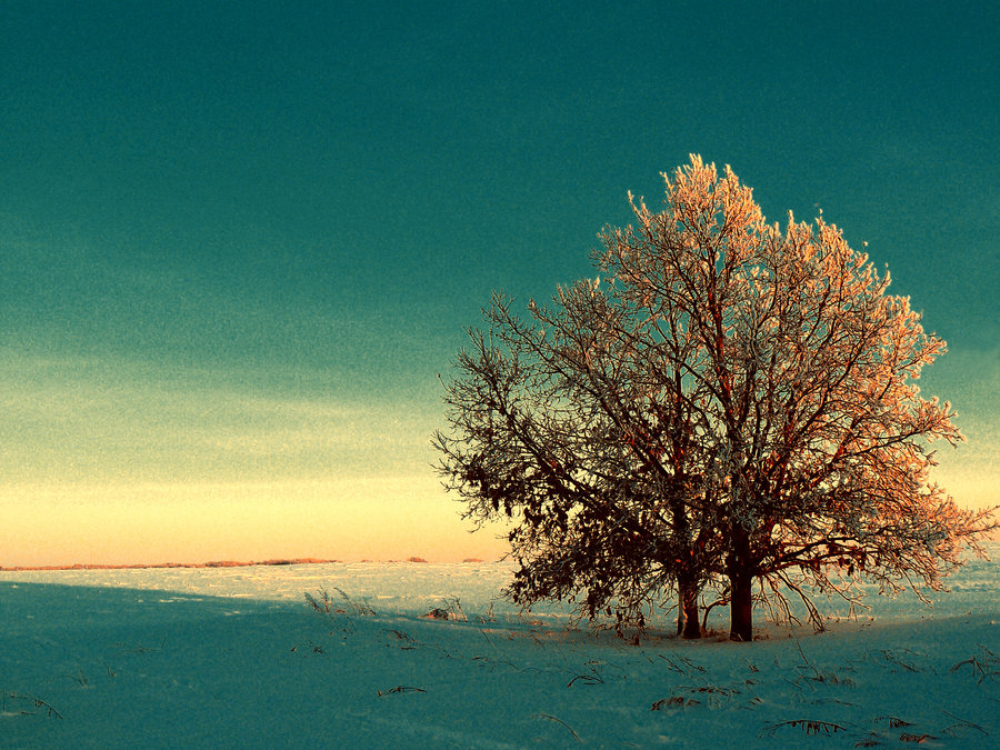 Image: Winter Tree by Anna Belash